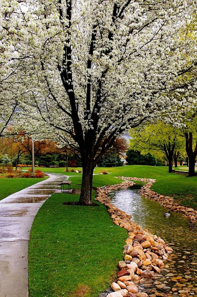 This was taken in Provo on BYU campus.  It was raining and I was trying to decide if I should walk up the river or the cement path, I chose the river.