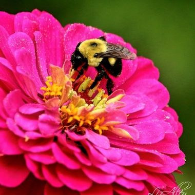 Bee Series I