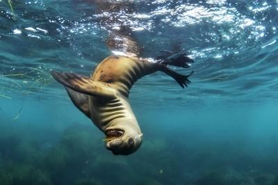 Playful  baby sea lion