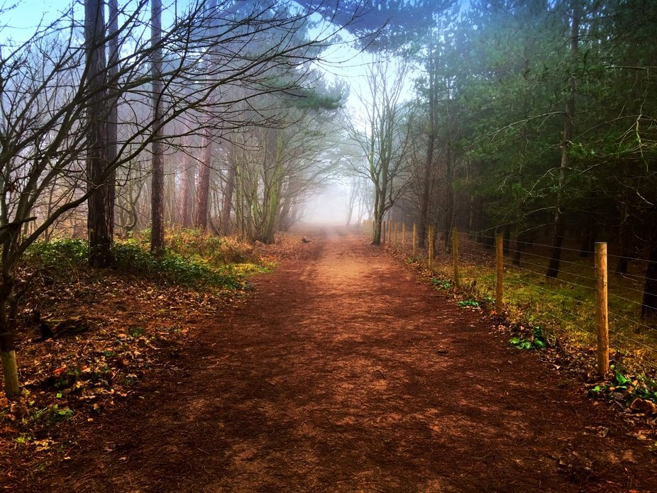 The mist descends in the woods whilst the sun shines.