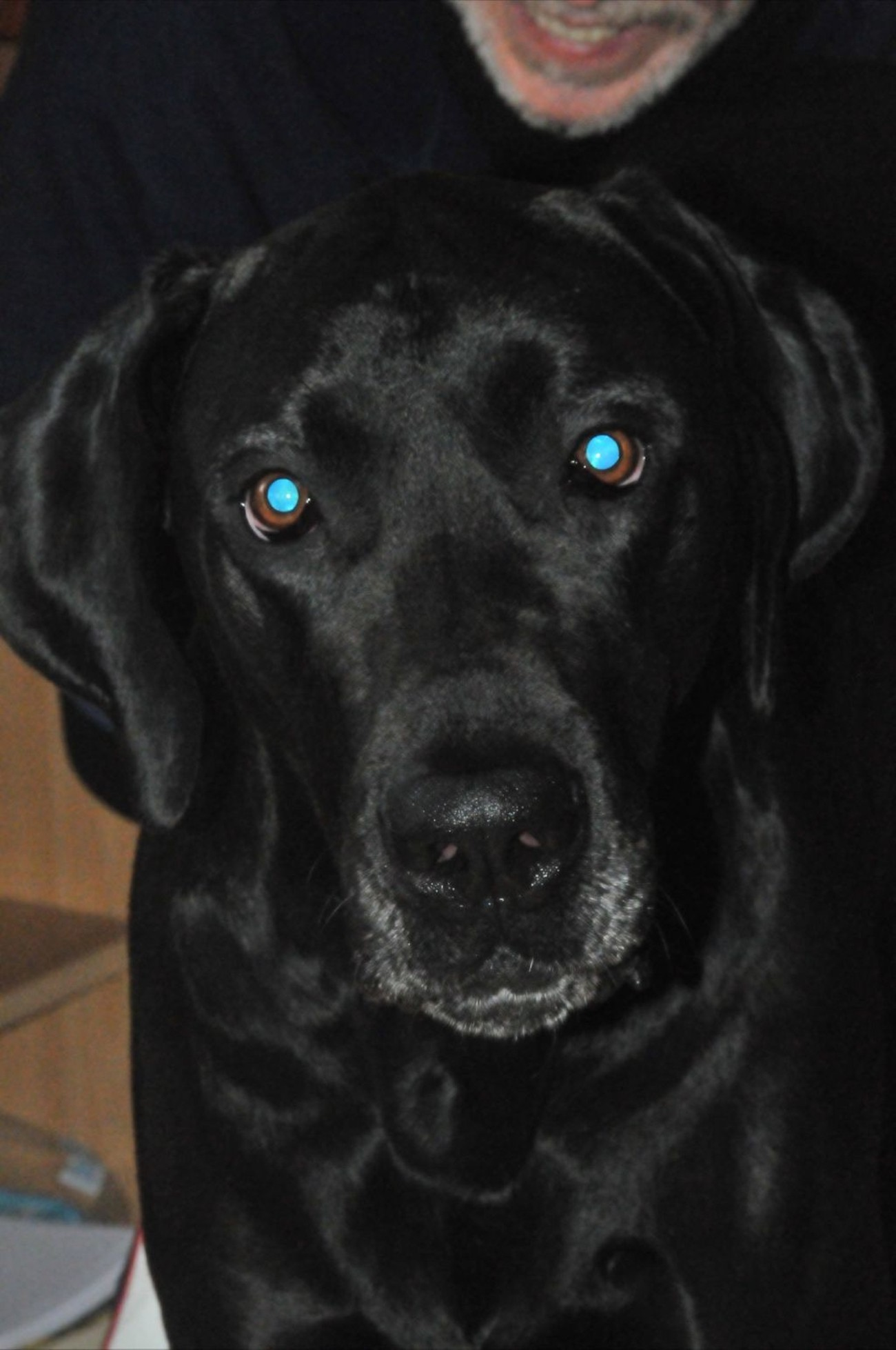 Normally a portrait tries to avoid reflection of the Flash in the eyes. Here I have deliberately left it to emphasize the love that this beautiful animal radiates through his eyes