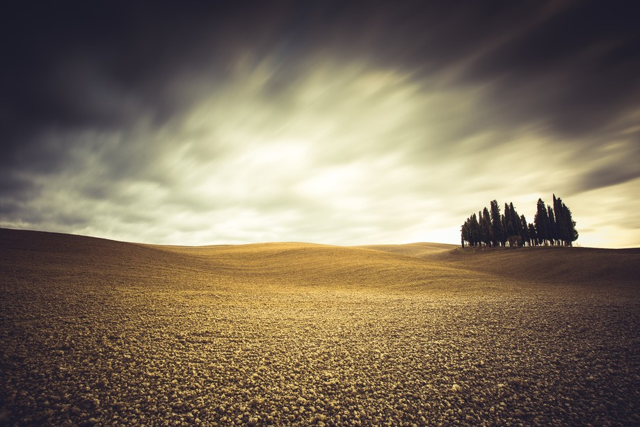 Isolated cypresses in Val D'Orcia, Tuscany (Italy)