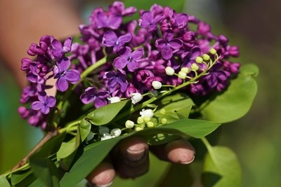 Lilac in the Hand