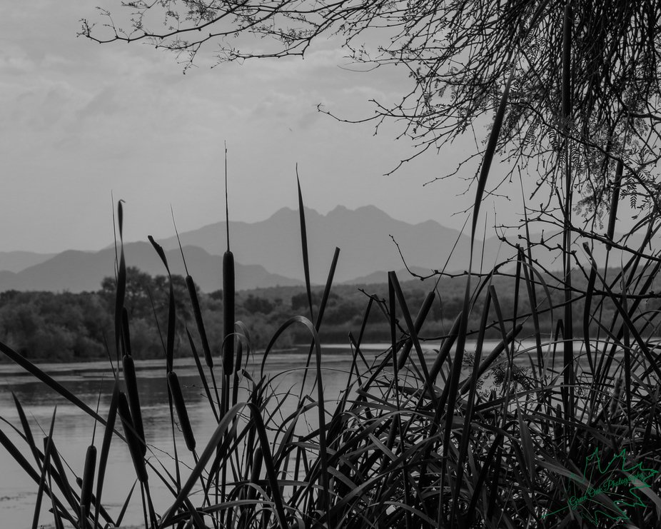 I was at the river today and it was overcast, the cattails caught my eye.