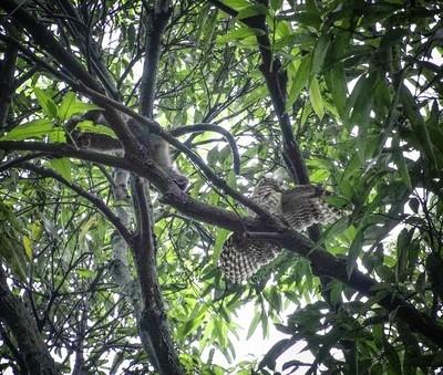 Monkey teasing an Owl