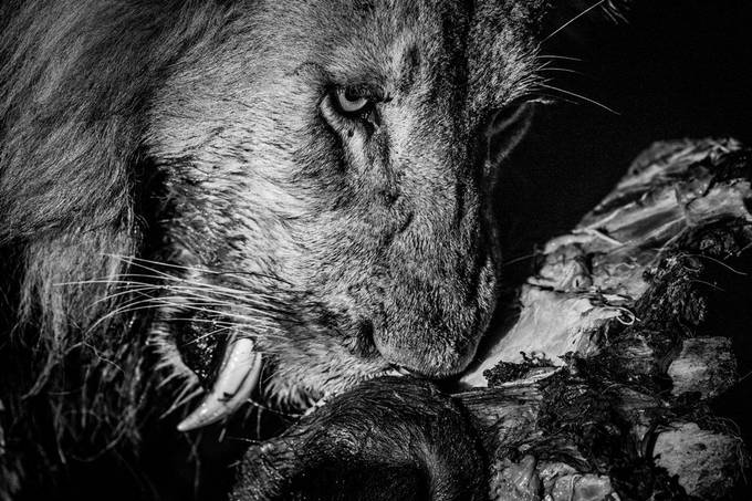 Lunch time! by Simon_eeman - Our World In Black And White Photo Contest