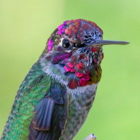 Vibrant Hummingbird Close Up