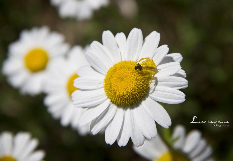 Me ha gustado siempre recorrer la naturaleza, admirar los pequeños detalles, las curiosidades qu...