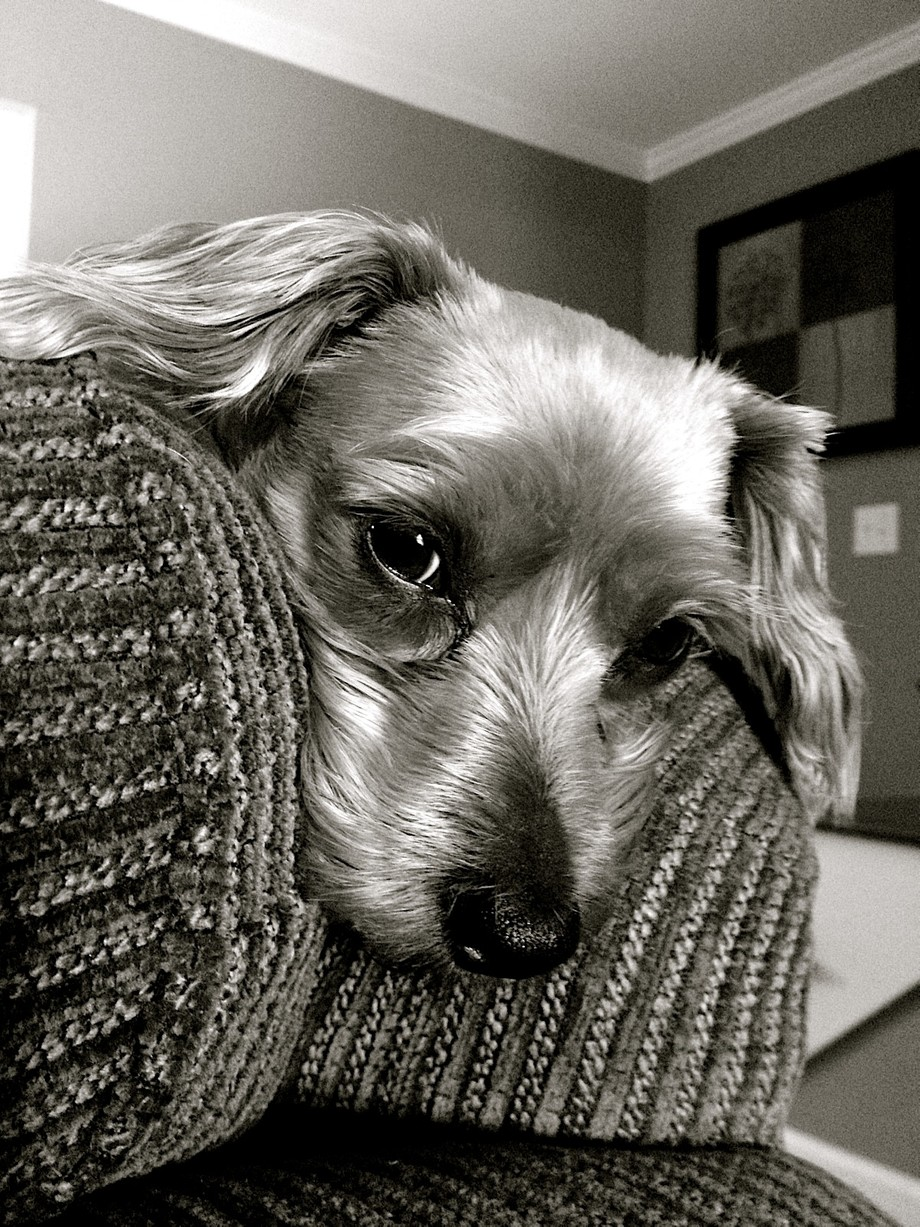 This is my fur baby, he was sad that day because his favorite playmate, my 5 yr old nephew had to go home.