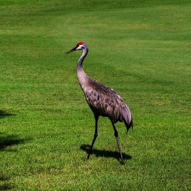 Stuttin' Crane