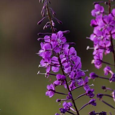 0P6A9433 wild flower