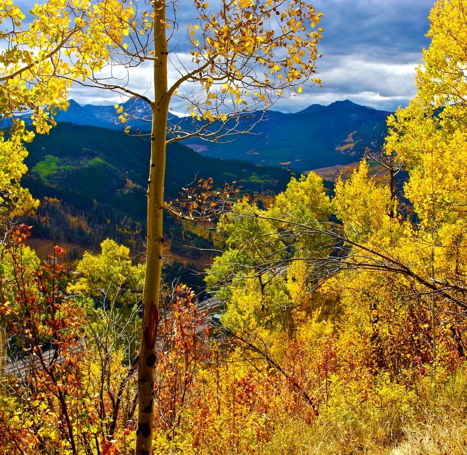 This image was captured in September 2016 on a hiking trail in Vail, Colorado.