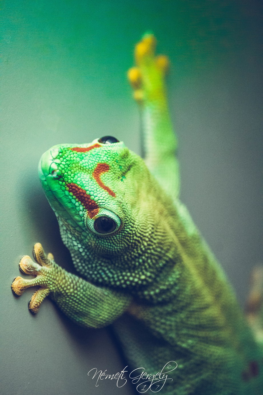 look at me  by gergelynemeti - Reptiles Photo Contest