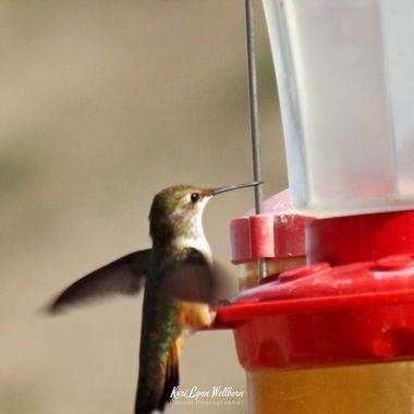 feeding in high winds