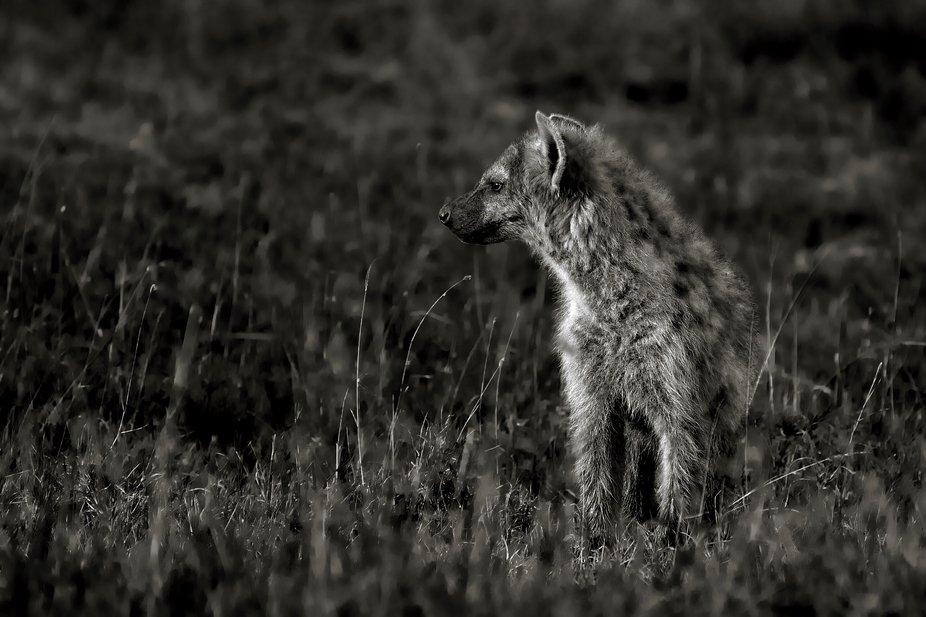 Riffel Africa Spotted Hyena 6486 BW