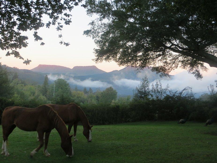 Horses in mountain sunset