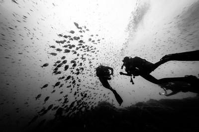 20 meters below sea - Bergeggi Island
