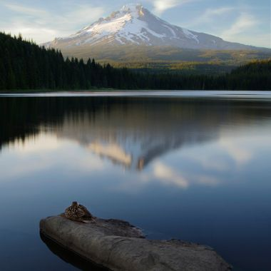 Mount Hood reflected in Trillium Lake, Oregon. The duck was kind enough to stay very still while a I took a series of long exposures to capture the reflection of the mountain in the lake.