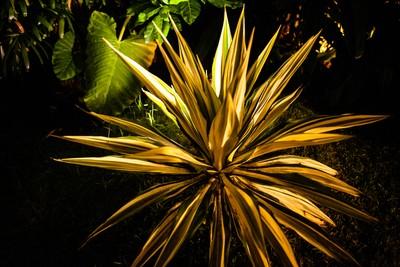 Bali_Plant_4