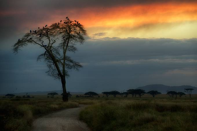 African motives by UsmanovRashid - Tall Trees Photo Contest