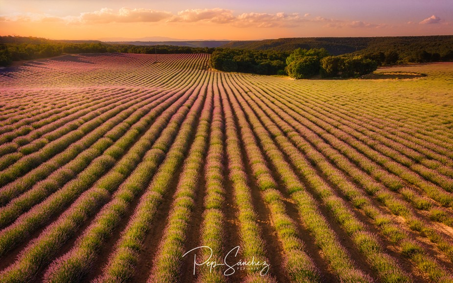 This is not Provence: it's Brihuega, the most incredible lavender field in Spain.