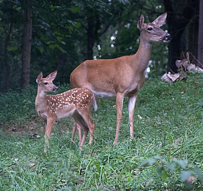 Mom and young