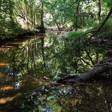 Ozarks Summer Reflection