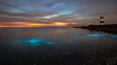 Bioluminescent Plankton, Anglesey, Penmon Point.