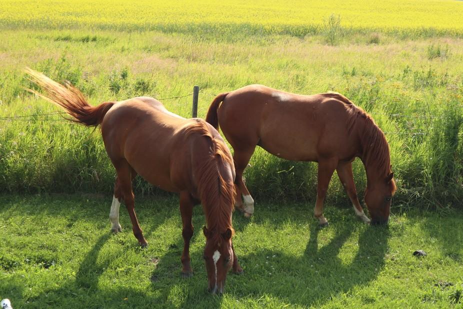 Misatim means Horse in my language. Sakitan means love.