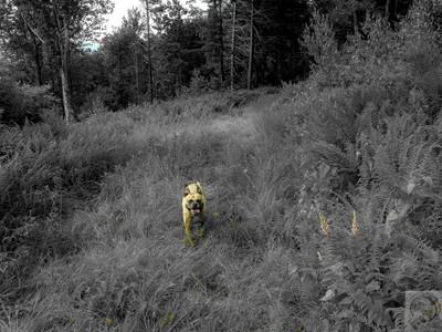 Happy Hiking Pup