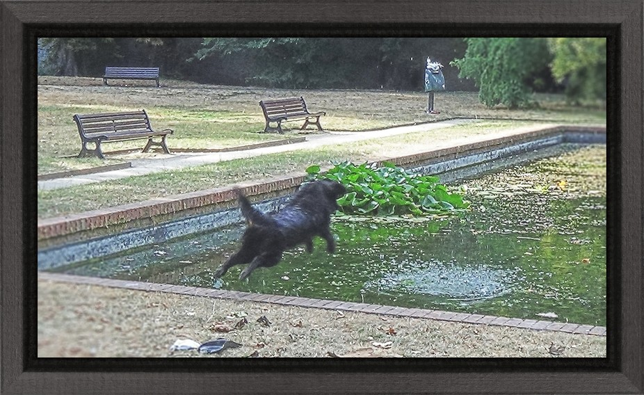 When I was in the city park in Tienen, I saw someone throwing a ball into the water and his dog was going to take him back there. A cool refreshment for the dog in these exceptionally tropical temperatures and beautiful to see. At his second jump I could make this photo just in time. Greetings Theo Herbots