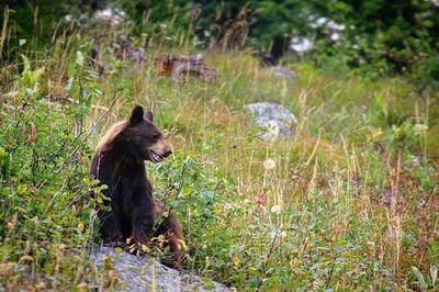 Awesome hike with some close up wildlife. Good girl! . . . #hikingadventures #wildplanet #wildlife #wildlifephotography #wyoming #naturelovers #nationalparks #discoverwildlife #discoverwyoming #canon70d #blackbear #bears #nature