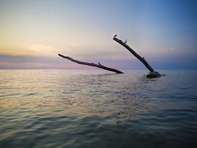 Seagulls & Drift Wood