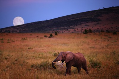 Full moon and the giant