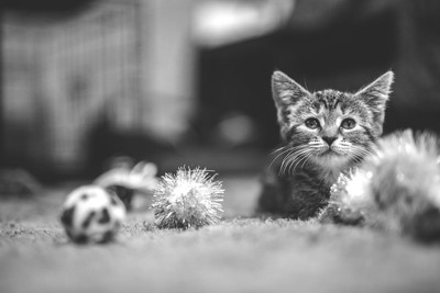 Kitty Play time