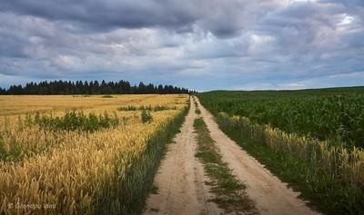 between the fields...