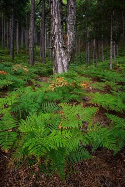 Thassos Mountain Forest
