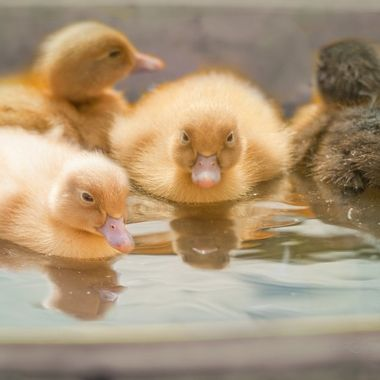 A little bit of water and a bundle of fluffy joy!