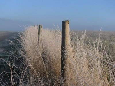 Frosty Fence Line