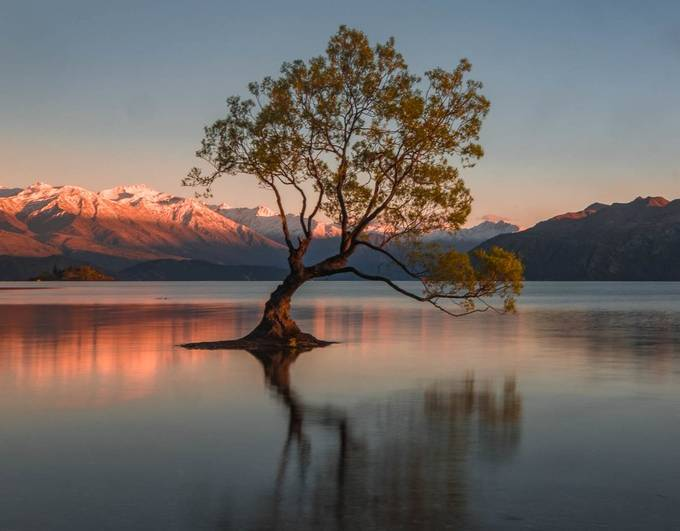 DSCF2790 Sunrise on Wanaka Tree by lindsaymuirhead - Stillness Photo Contest