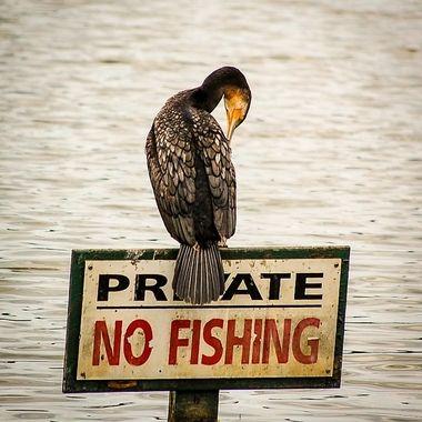 Taken at Birdham Pool, Chichester Harbour, West Sussex.