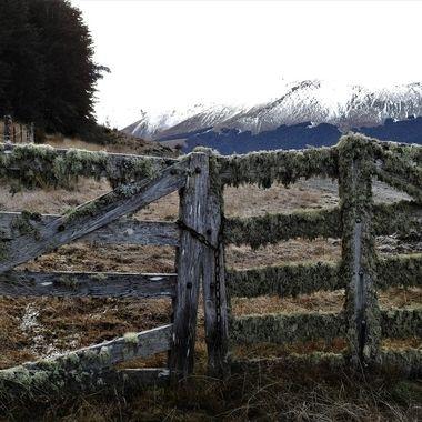 Lichen gate