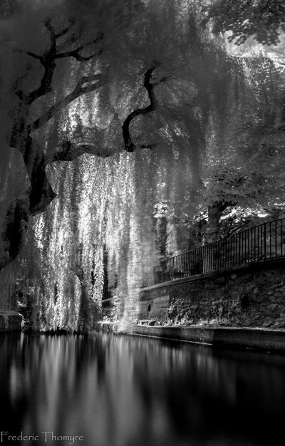Weeping Willow Shadow