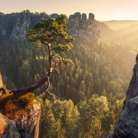 One of Germany's finest places to photograph: Elbsandsteingebirge at the very east of Germany. This weathered tree leans into the golden mor...