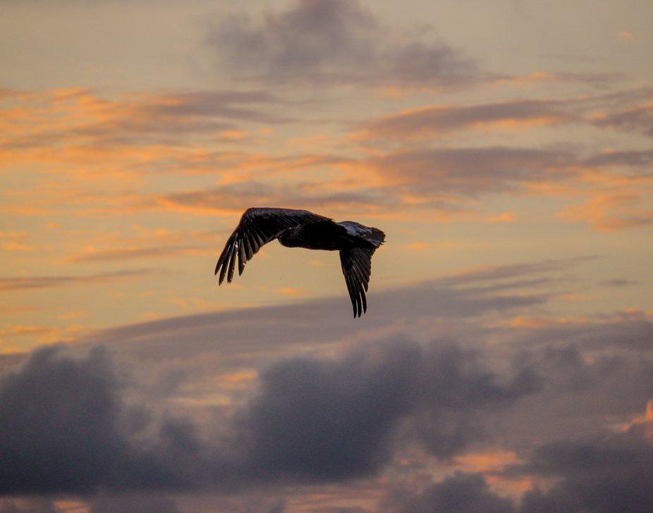 Tolan Pelican-2655