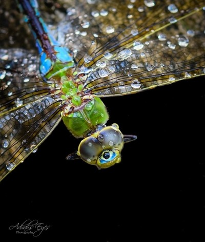 Dragon Fly: Another POV