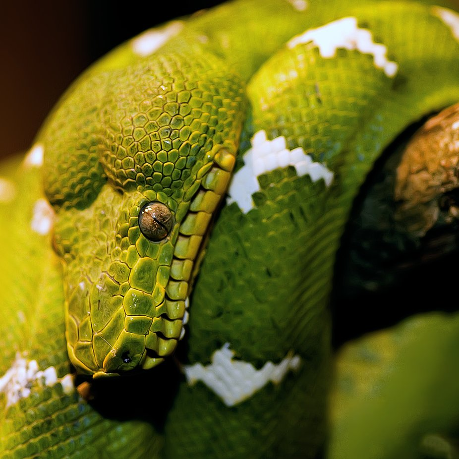 slytherin by dKi_Photography - Reptiles Photo Contest