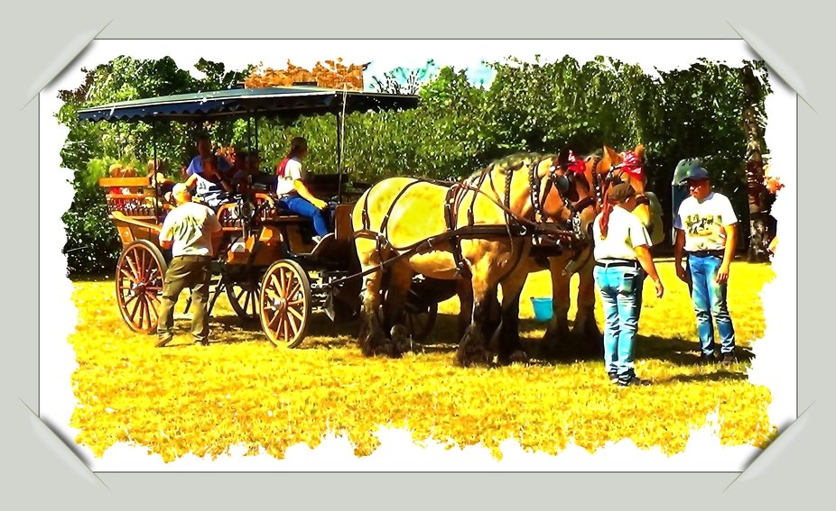 """During the Roman occupation of the area that is now called Belgium, the Belgian draft horse was already mentioned. From the 11th to the 16th century the draft horse was used as a war horse in Brabant. After that, the Belgian draft horse was used to pull heavy equipment in the countryside, in the mining industry and in the port. They also drew (post) coaches and ships.  In 1886 the studbook of the """"Sociëteit van het Belgisch Trekpaard"""" was established. In 1910 about 35,000 Belgian draft horses were exported from Belgium to the United States, Canada, Russia, Sweden, Germany, France, Great Britain, the Netherlands and Italy to improve the horses present there, such as the shire in Great Britain.  In 1950 there were about 200,000 draft horses in Belgium.  Due to agricultural mechanization after the Second World War, the draft horse became superfluous. In 1980 there were only 6000 Belgian draft horses left. A number of breeders went to work to keep this breed of horses. In 2004 there were about 12,000 Belgian draft horses. They are now used to drive.  Many of these horse farms were and can be found in the Pajottenland. In the center of Vollezele (Galmaarden) is the Museum of the Belgian draft horse and in the Pajotse villages Vollezele and Sint-Kwintens-Lennik (Lennik) are statues of Belgian draft horses."""