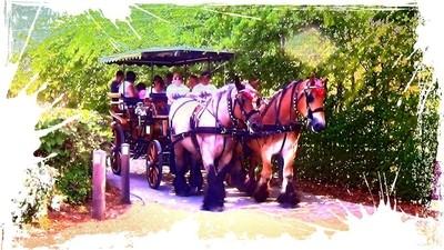 Brabantse Tekpaarden op het Viander-Domein in Tienen