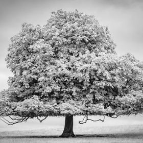 "I saw this tree at Dryham Park, just there all on its on - it reminded me of a quote by Khalil Gibran -  "" If you reveal your secrets to the..."